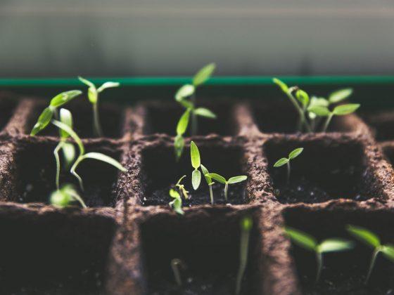 Growth marketing - Agence Sharing